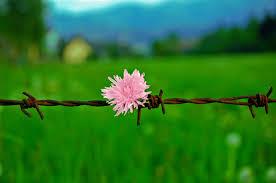 Freedom by Sowizo.